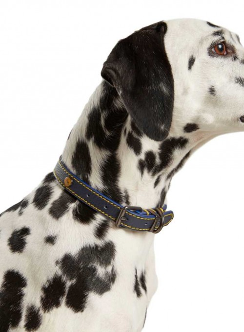 Läder hundhalsband Navy från Joules