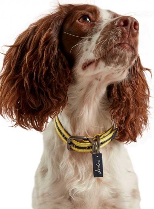 Hundhalsband läder-nylon gul-blå från Joules